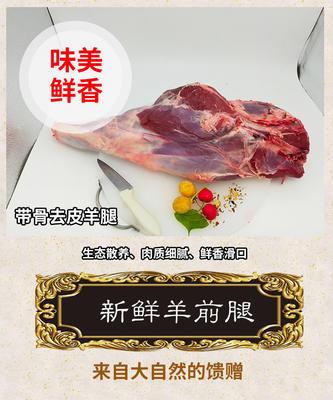 这是一张关于羊腿肉 生肉 的产品图片