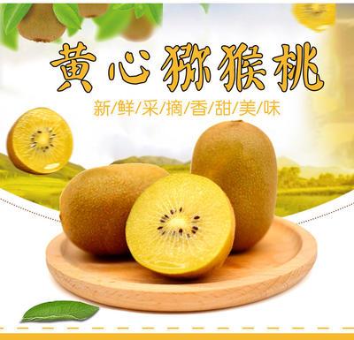 广东省潮州市湘桥区黄心猕猴桃 120克以上