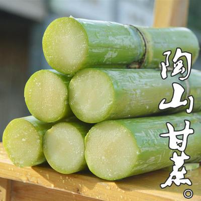 广东省潮州市湘桥区青皮甘蔗 3 - 4cm 1m以下