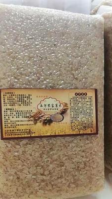 广东省梅州市五华县菩米 一等品 中稻 粳米