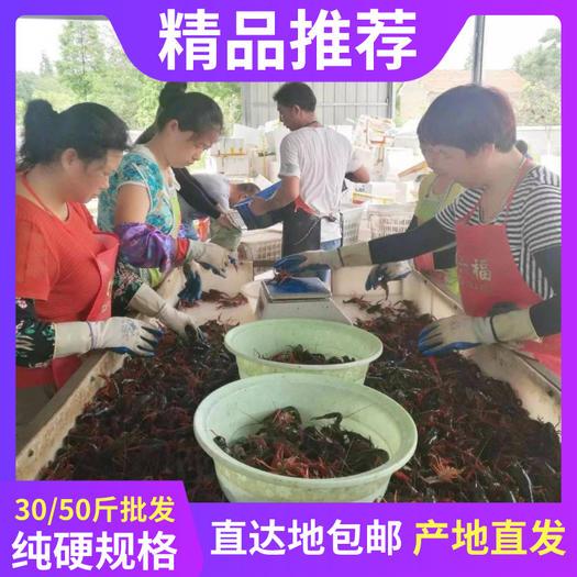 🌸精品推荐🌸洪湖小龙虾🦞产地直发⭐⭐⭐ ⭐⭐