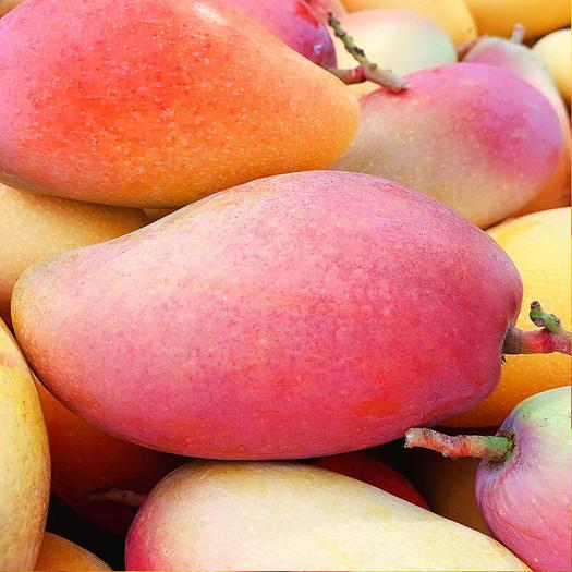 贵妃芒果中大果水果新鲜青应热带忙果特当季整箱现摘10斤包邮