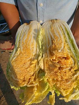 河南省许昌市禹州市红心大白菜 2~3斤 净菜