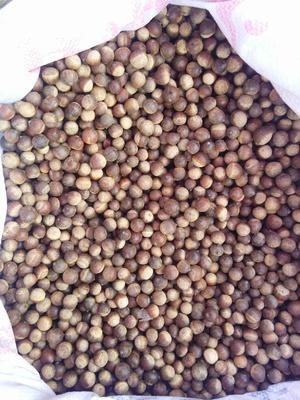 这是一张关于云南板栗 特级 小粒的产品图片