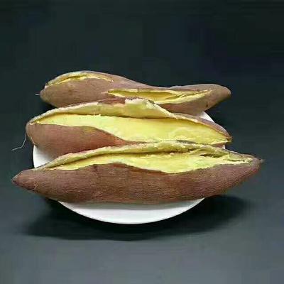这是一张关于板栗薯 红皮 3两以上的产品图片