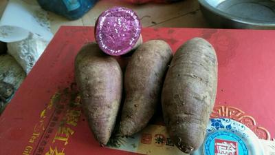 山东临沂紫罗兰紫薯 3两以上