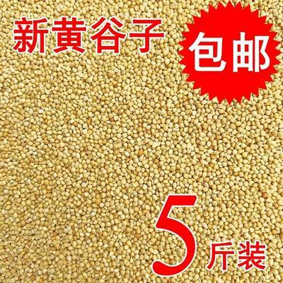 陕西咸阳黄皮谷子 2017年新米,石磨去皮,自产自销,包邮