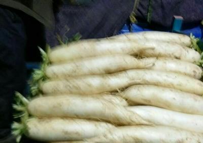 山东聊城白萝卜 3.5~4斤