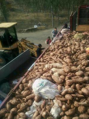 这是一张关于红薯地瓜粉的产品图片