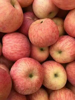 这是一张关于红富士苹果 纸袋 条红 75mm以上 山东冷库纸袋条纹红富士苹果批发货源充足的产品图片