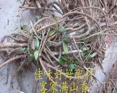 浙江省衢州市龙游县香叶