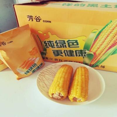 黑龙江七台河速冻糯玉米