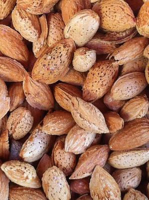 新疆阿克苏巴旦木 1年以上 带壳