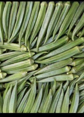 山东淄博水果秋葵 6 - 8cm