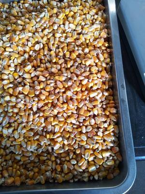 吉林延边朝鲜玉米粒干粮 霉变≤2% 净货