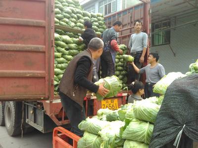 重庆莲花白包菜 3.5~4.0斤