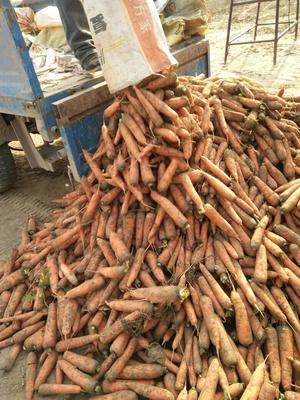 这是一张关于三红红萝卜 0.2~1斤的产品图片