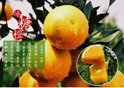湖南永州冰糖橙 55mm以下 4两以下