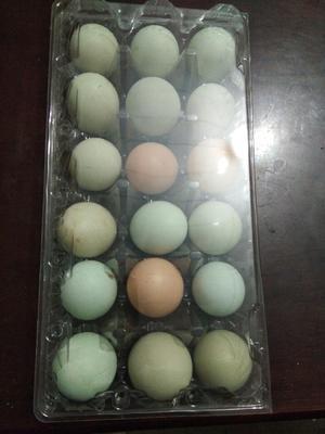 河南南阳土鸡蛋 食用 礼盒装