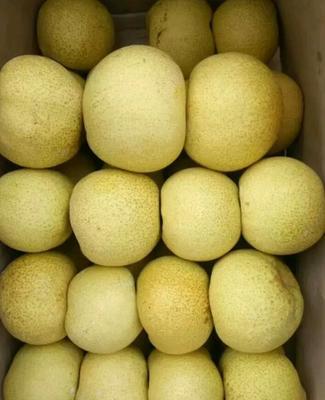 这是一张关于酥梨 250-300g 70mm以上 梨 酥梨的产品图片