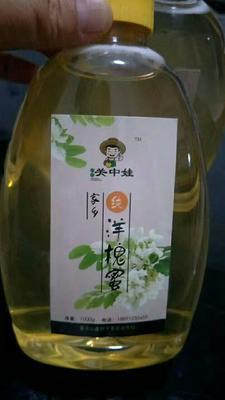 陕西渭南洋槐蜂蜜 塑料瓶装 100% 2年