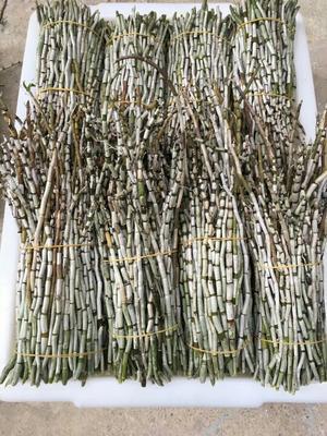 浙江温州石斛鲜条 仿野生树植老白条