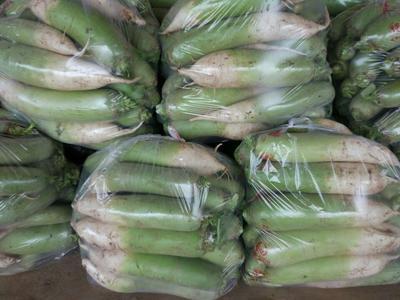 河南平顶山青头萝卜 1.5~2斤