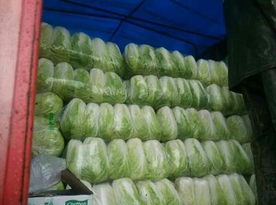 河南平顶山青杂三号白菜 3~6斤 净菜
