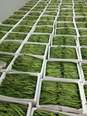 云南保山绿扁豆 2cm以上 10cm以上