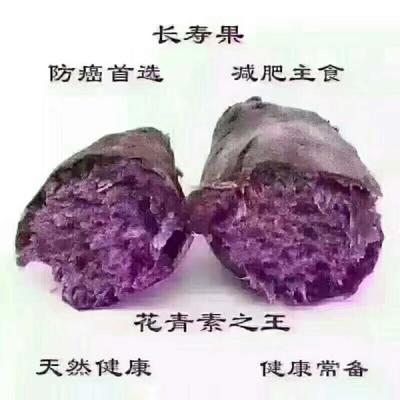 广西崇左越南紫薯 2两以下 正宗越南进口小紫薯