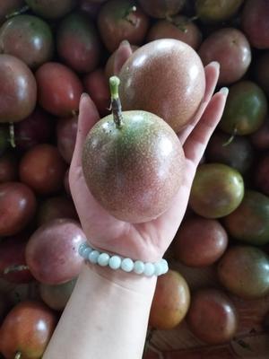 这是一张关于紫香一号百香果 80 - 90克 一级精品大果买5斤送半斤,共发5.5斤的产品图片