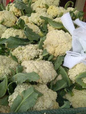 湖北天门松花菜 适中 2~3斤 乳白