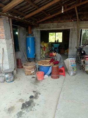 江西景德镇油茶籽