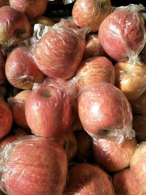 这是一张关于冰糖心苹果 膜袋 条红 75mm以上的产品图片