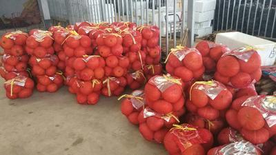 广西南宁金瓜 2~4斤 扁圆形