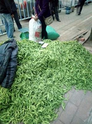 广西柳州甜脆豌豆 7-10cm 未饱满