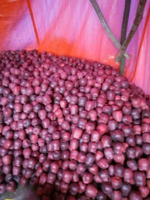 甘肃天水花牛苹果 光果 全红 80mm以上