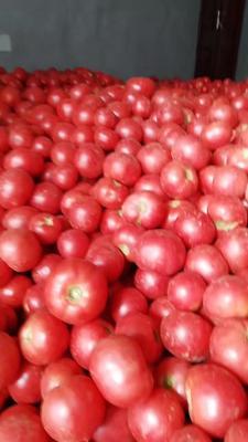 这是一张关于粉红宝西红柿 不打冷 硬粉 弧一以下的产品图片