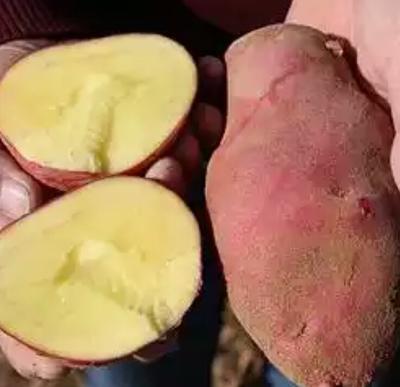 这是一张关于青薯9号 4两以上的产品图片