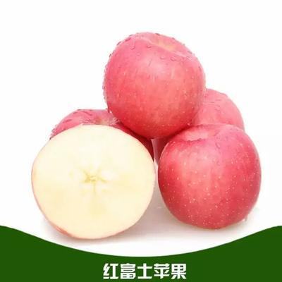 陕西渭南红富士苹果 膜袋 全红 75mm以上