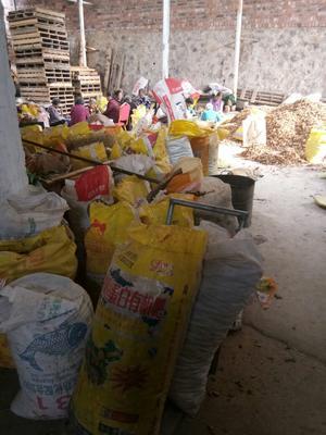 湖南永州油茶籽