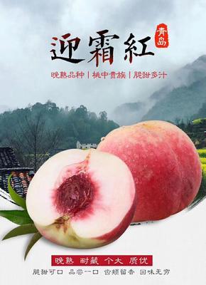 山东青岛映霜红蜜桃 70mm以上 4两以上
