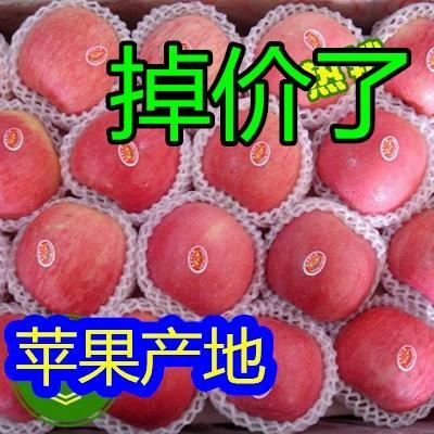 这是一张关于红富士苹果 纸袋 条红 75mm以上的产品图片