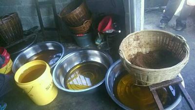 广西百色现榨山茶油