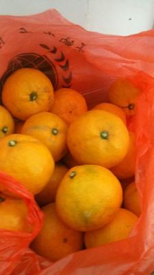 这是一张关于宫川蜜桔 2.5 - 3cm 1.5 - 2两的产品图片