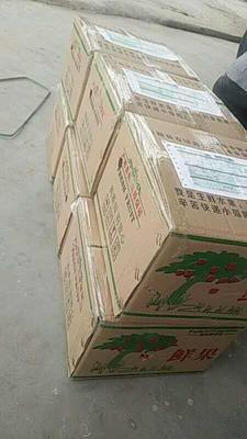 这是一张关于红富士苹果 纸+膜袋 条红 75mm以上的产品图片