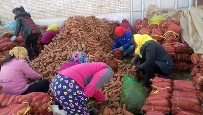 山西省长治市长子县长红胡萝卜 10~15cm 2两以上 3~4cm