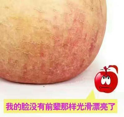 这是一张关于丑苹果 膜袋 锈斑 85mm以上 冰糖心丑苹果二级果包邮不包售后的产品图片