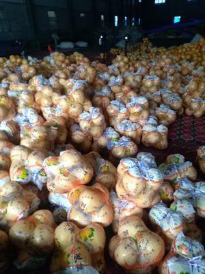 福建漳州平和蜜柚 1.5斤以上