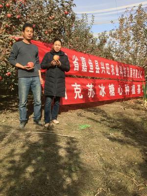 新疆阿克苏红富士苹果 光果 条红 80mm以上